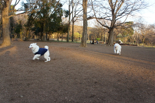 2015年横浜~東京旅行 その2_f0128542_257193.jpg