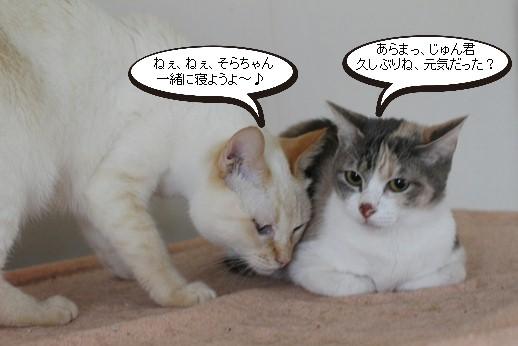 今日の保護猫さん達_e0151545_21552681.jpg