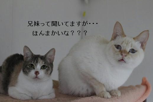 今日の保護猫さん達_e0151545_21554937.jpg