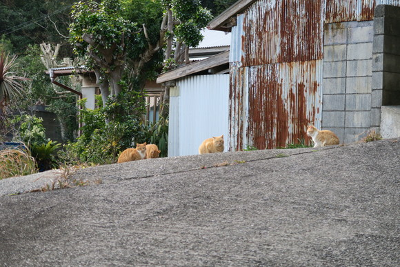 猫ちゃん  パート2!_e0292172_20331398.jpg