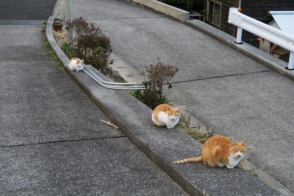 猫ちゃん  パート2!_e0292172_20385490.jpg