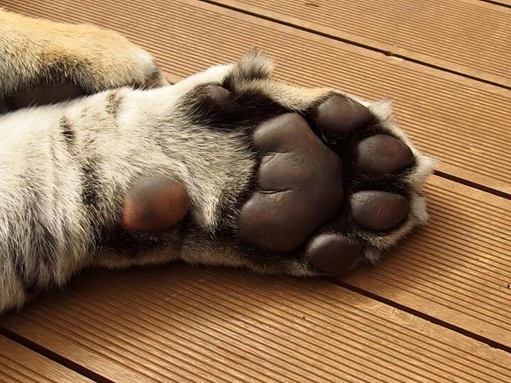 Tiger Kingdom_b0195783_8322881.jpg