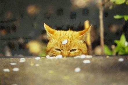 たまごの工房企画展 「 高円寺裏通り猫 展 」 その4_e0134502_16304280.jpg