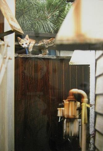 たまごの工房企画展 「 高円寺裏通り猫 展 」 その4_e0134502_16351892.jpg