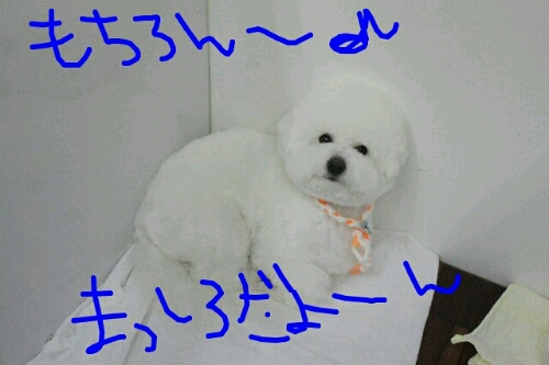 b0130018_1552228.jpg
