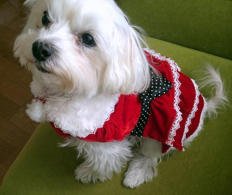 クリスマスケーキなど♪_f0141419_06361198.jpg