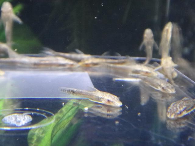 150122 熱帯魚・金魚・水草_f0189122_1354457.jpg