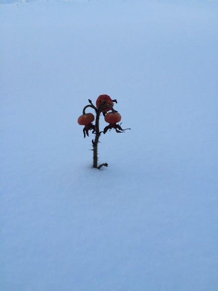 雪、雪、雪_f0354435_11592213.jpg