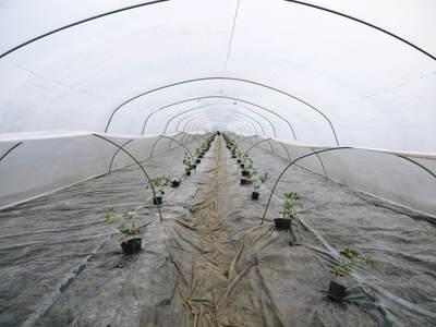 夢スイカ 大玉スイカ『春のだんらん』を4月中旬の出荷に向け定植しました _a0254656_16502516.jpg
