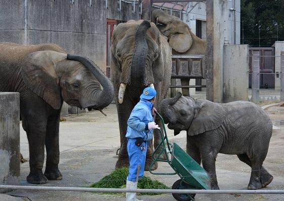 動物園でじっくり家族の姿を観察してみませんか!_e0272869_18412927.jpg