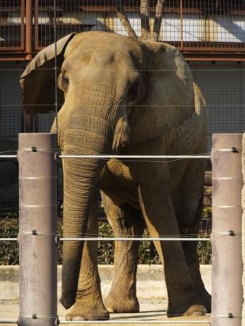 動物園でじっくり家族の姿を観察してみませんか!_e0272869_18422443.jpg