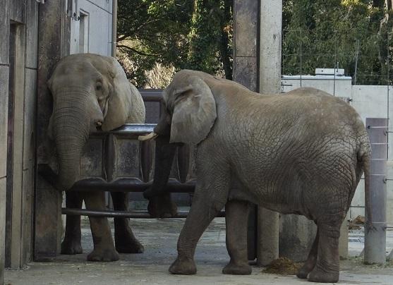 動物園でじっくり家族の姿を観察してみませんか!_e0272869_18444916.jpg