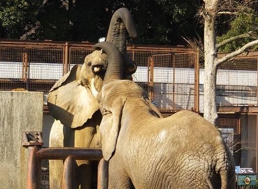 動物園でじっくり家族の姿を観察してみませんか!_e0272869_20022935.jpg