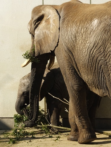 動物園でじっくり家族の姿を観察してみませんか!_e0272869_20252256.jpg