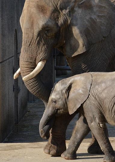 動物園でじっくり家族の姿を観察してみませんか!_e0272869_20311612.jpg