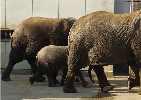 動物園でじっくり家族の姿を観察してみませんか!_e0272869_20334517.jpg