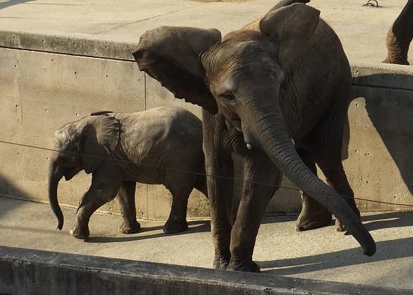 動物園でじっくり家族の姿を観察してみませんか!_e0272869_20365729.jpg