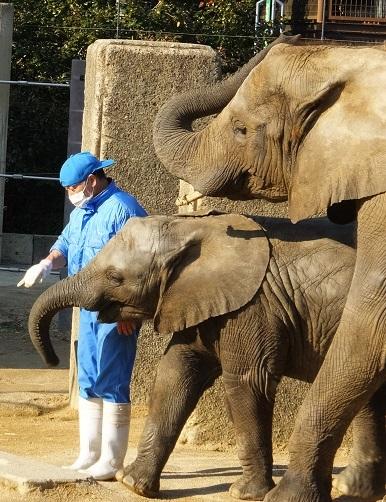 動物園でじっくり家族の姿を観察してみませんか!_e0272869_20564578.jpg