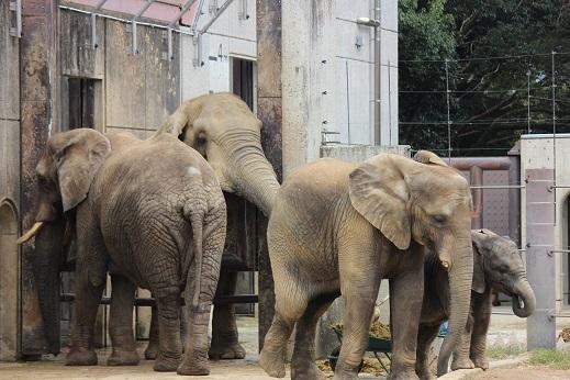 動物園でじっくり家族の姿を観察してみませんか!_e0272869_21181619.jpg