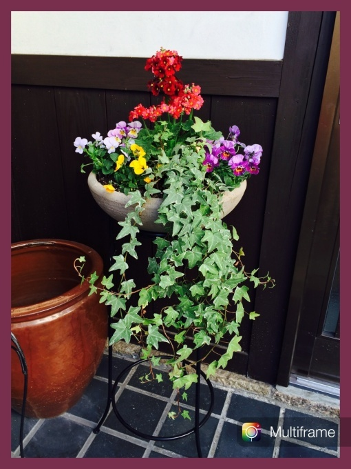 Welcome Flower_a0285570_23195113.jpg