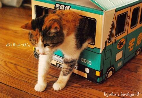 『箱ねこ』はネコがついつい取ってしまう狩りの習性とパーソナルスペースの確保