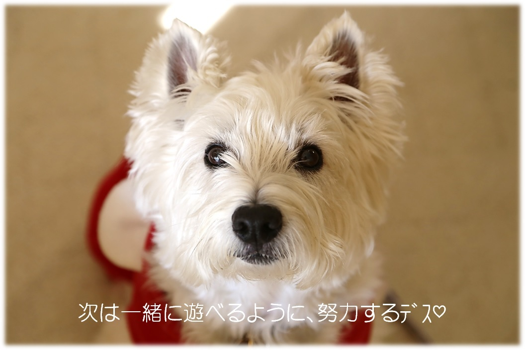 ☆ はじめましてのラピスくん ☆_a0161111_00330202.jpg