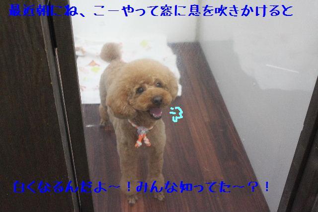 b0130018_1405590.jpg