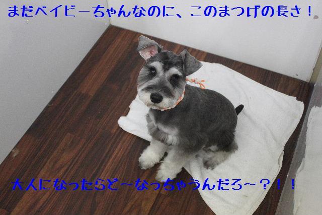 b0130018_14101247.jpg