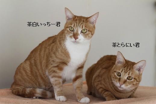 飼育崩壊猫さん達3ニャン_e0151545_21504116.jpg