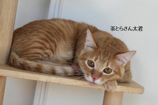 飼育崩壊猫さん達3ニャン_e0151545_21532747.jpg