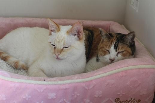 飼育崩壊猫さん達3ニャン_e0151545_21543689.jpg