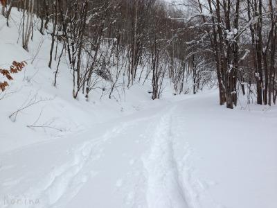 この冬 初スノーシュー_e0326953_1455890.jpg