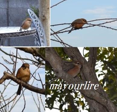 春を告げる鳥_d0169179_2334132.jpg