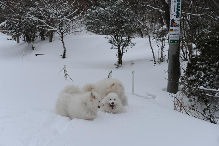 プチ新年会&雪遊び_a0049296_1819876.jpg