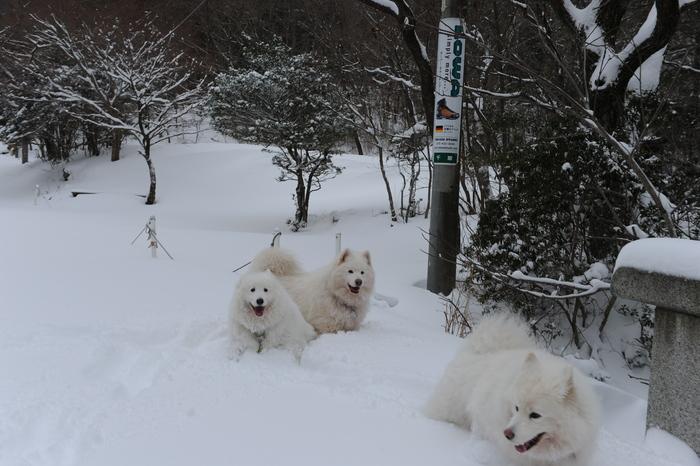 プチ新年会&雪遊び_a0049296_18201728.jpg