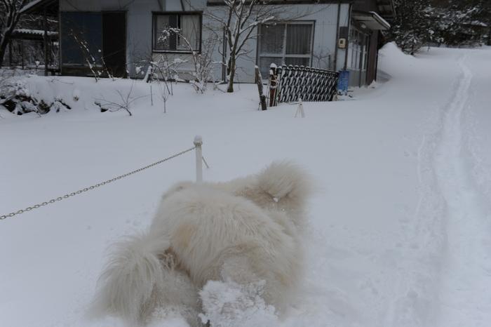 プチ新年会&雪遊び_a0049296_18203526.jpg
