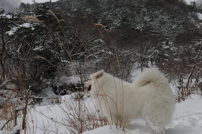 プチ新年会&雪遊び_a0049296_18205034.jpg