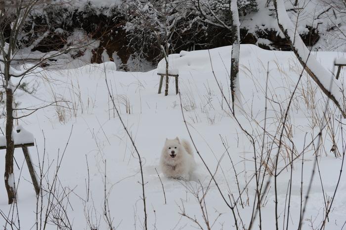 プチ新年会&雪遊び_a0049296_18221016.jpg