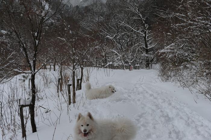 プチ新年会&雪遊び_a0049296_18222551.jpg