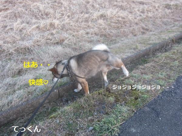 f0143123_1045541.jpg