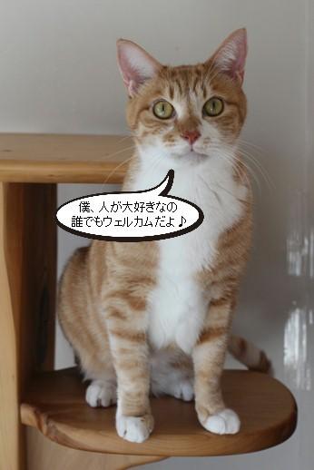 崩壊猫でかいっす!_e0151545_20034021.jpg