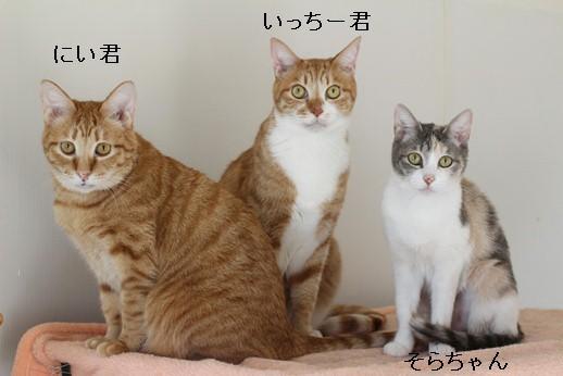 崩壊猫でかいっす!_e0151545_20042401.jpg