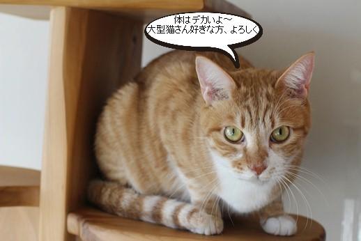 崩壊猫でかいっす!_e0151545_20044386.jpg