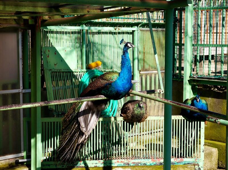 和歌山公園動物園_b0093754_2029729.jpg