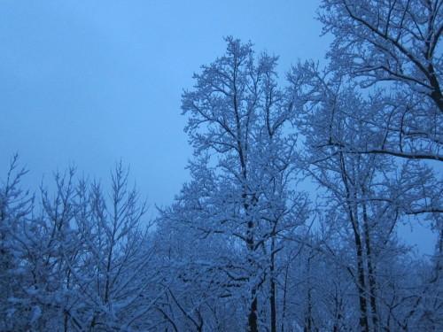 外は大雪・・なので、日本文学が無料で読めるサイト_d0240098_22200964.jpg