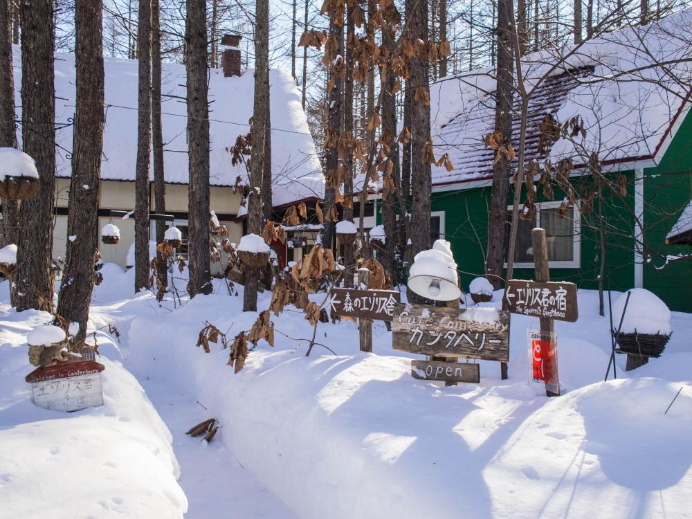 中札内村の冬らしい朝にエゾリス君~ブログが1000回目を達成~_f0276498_19340038.jpg