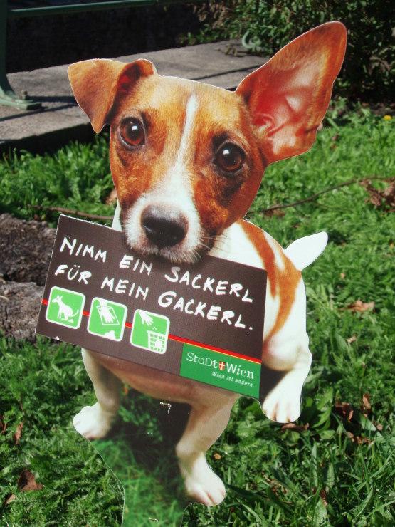 こんな犬種なんだね!_f0249710_01091033.jpg