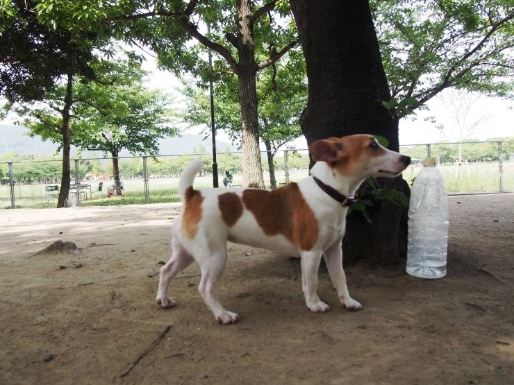 こんな犬種なんだね!_f0249710_01104037.jpg