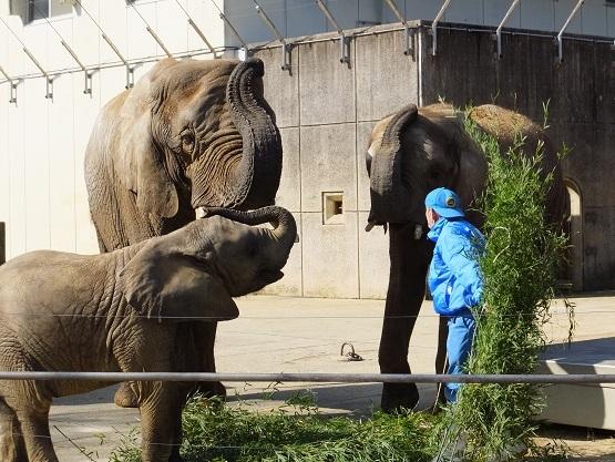 ゾウさんがつなぐ人との縁、ゾウさんはつなぐその命 _e0272869_11493876.jpg