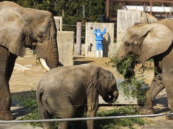 ゾウさんがつなぐ人との縁、ゾウさんはつなぐその命 _e0272869_20265847.jpg